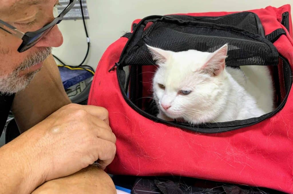 best cat backpack review
