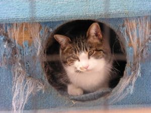 5 tips to reduce cat anxiety