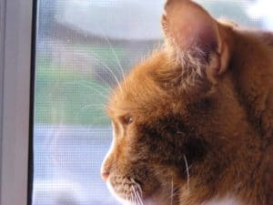 5 tips to help manage your cat's anxiety