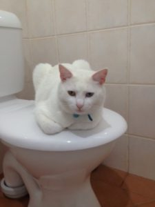 Neko taking control of our Poo Palace